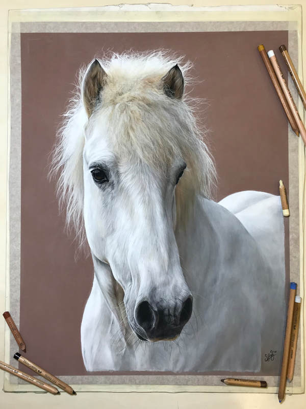pastel commission of grey horse by sophie fois