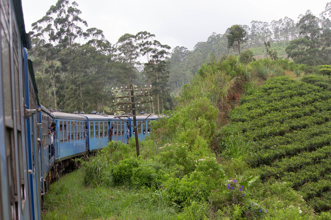 Train in Sri Lanka tea plantations