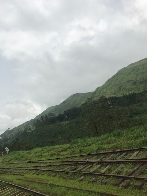 view from train in sri lanka tea plantations