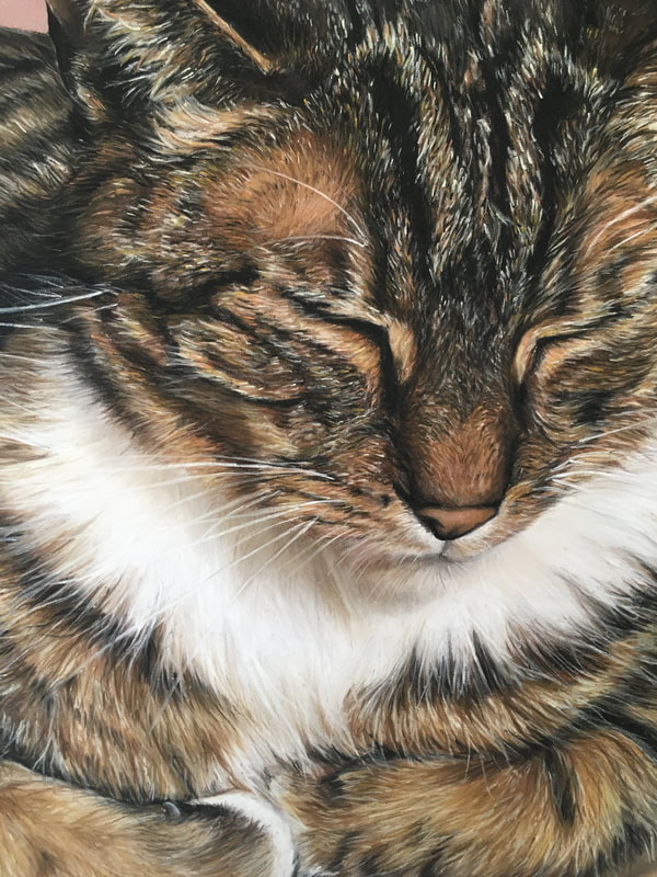 pastel commission of tortoiseshell cat by sophie fois