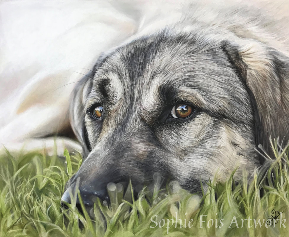 pastel commission of german shepherd dog by sophie fois